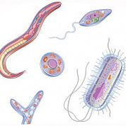 Паразиты в организме: узнайте, стоит ли вам провериться